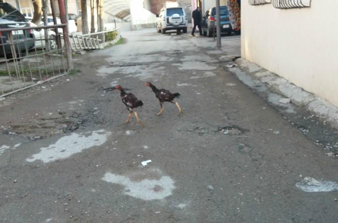 Свободни пилета