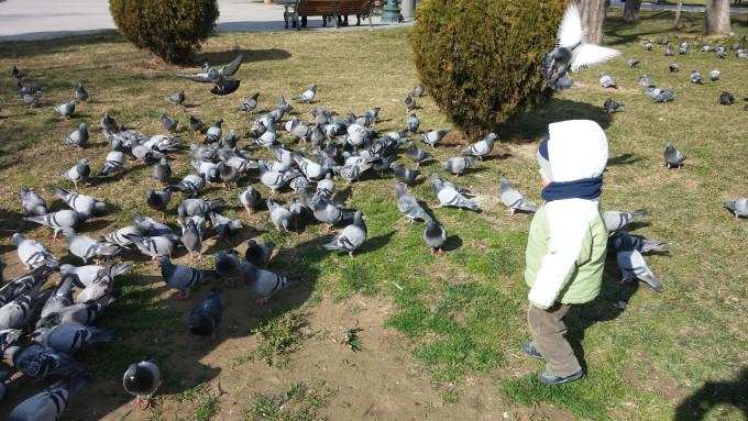 Любов към гълъбите