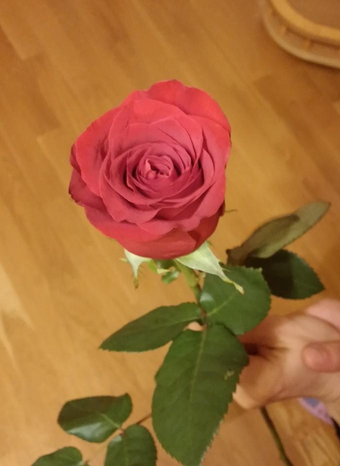 Цветя без повод